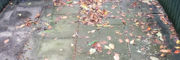 BGS-Reiniging- milieuvriendelijke reiniging van bestrating - project reiniging
